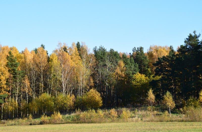 Herbstlandschaft in Lettland stockfotografie