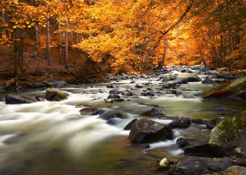 Herbstlandschaft mit Bäumen und Fluss stockfotos