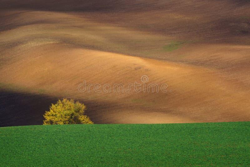 Herbstlandschaft mit Bäumen und wellenartig bewegten Feldern lizenzfreies stockbild