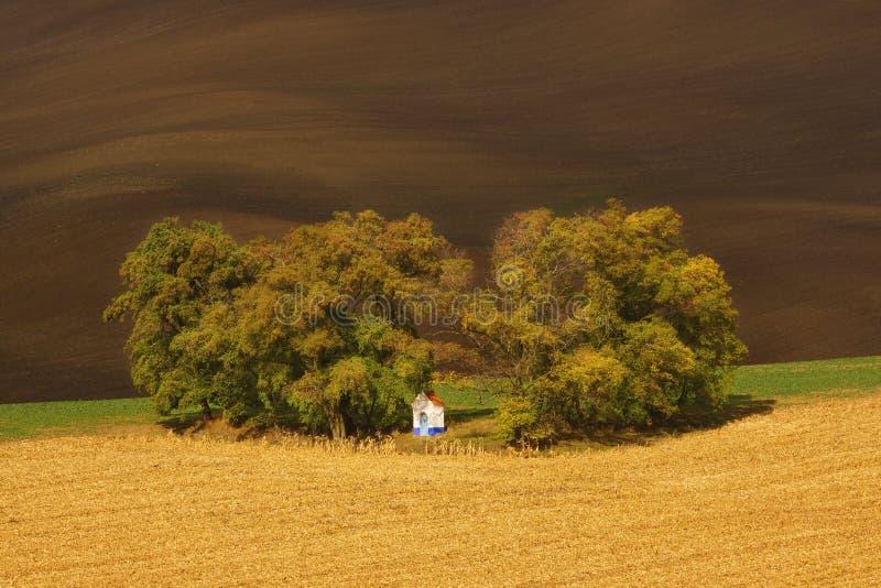 Herbstlandschaft mit Bäumen und wellenartig bewegten Feldern lizenzfreies stockfoto