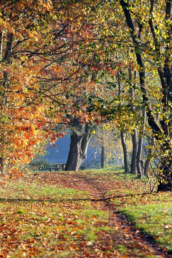 Herbstlandschaft mit colorfull Bäumen lizenzfreie stockfotografie