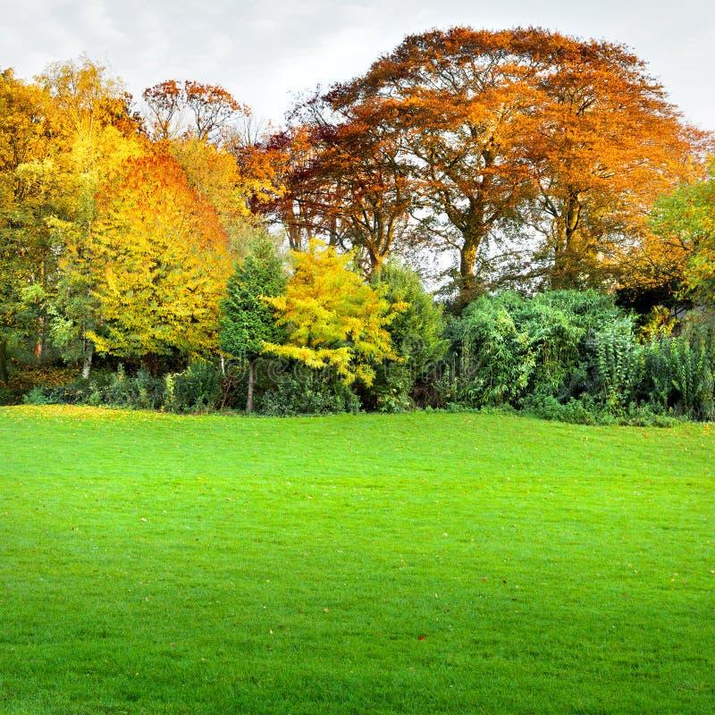 Herbstlandschaft mit einem Rasen im Vordergrund. stockfotografie