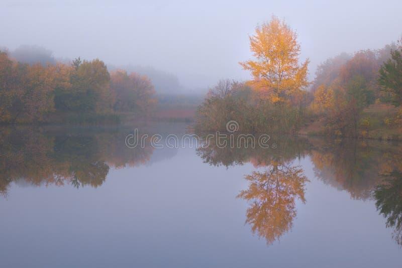 Download Herbstlandschaft Mit Gelbem Baum Stockbild - Bild von moos, herbst: 26364681