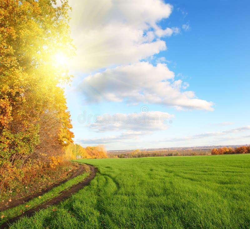 Herbstlandschaft mit grünem Feld lizenzfreie stockfotografie