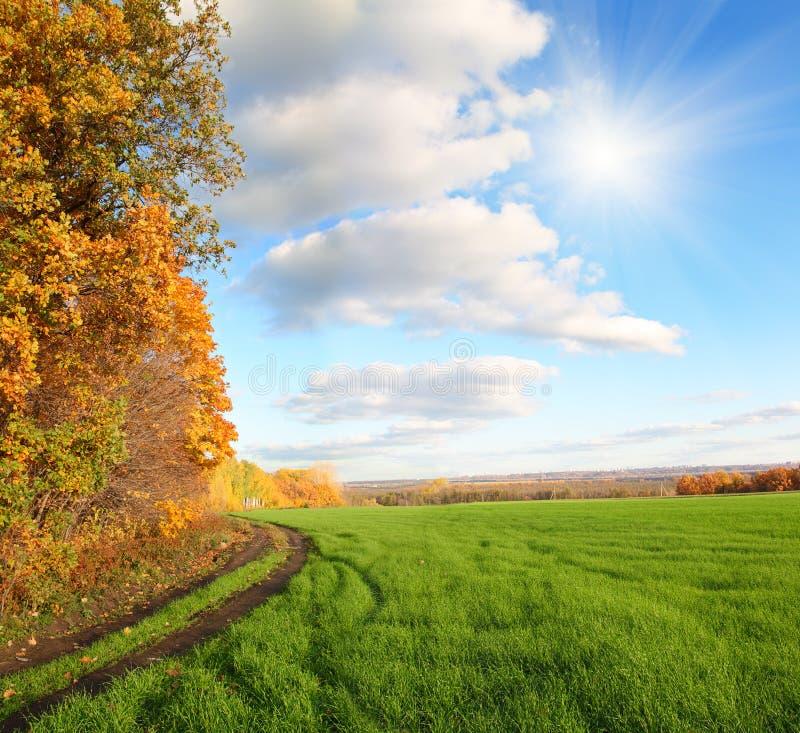 Herbstlandschaft mit grünem Feld stockfoto