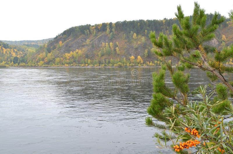 Herbstlandschaft mit hellen Farben auf der Flussbank lizenzfreies stockbild