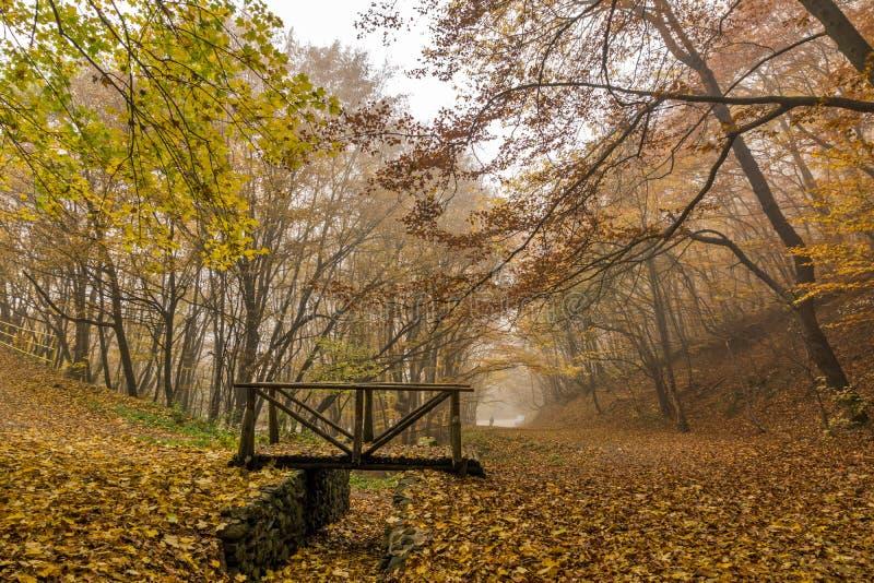 Herbstlandschaft mit Nebel im gelben Wald und in der Holzbrücke, Vitosha-Berg, Bulgarien lizenzfreie stockfotografie