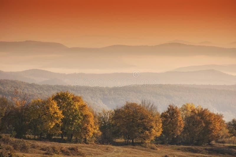 Herbstlandschaft mit Orangenbäumen im Morgen ligh stockfotos