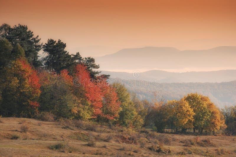 Herbstlandschaft mit Orangenbäumen im Morgen ligh stockfotografie