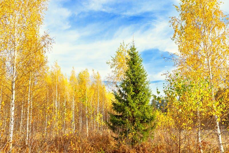 Herbstlandschaft mit Wald und blauem Himmel stockfotografie