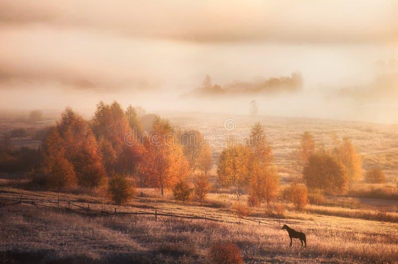 Herbstlandschaft in Russland Morgennatur lizenzfreies stockbild