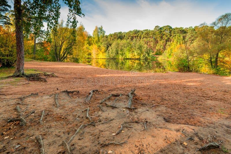 Herbstlandschaft, Ufer von einem See, Nahaufnahmebaum wurzelt lizenzfreie stockfotos