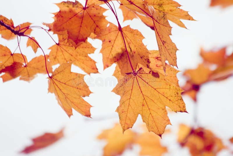 Herbstlaub stockfotografie