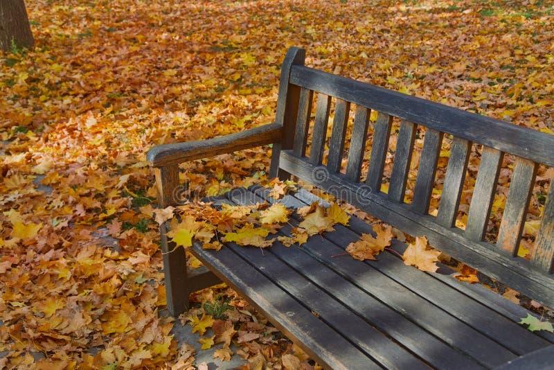 Herbstlaub auf Bank lizenzfreie stockfotografie
