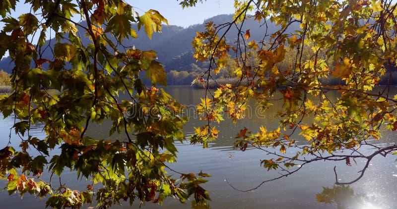 Herbstlaub auf Baumast über dem See lizenzfreie stockfotos