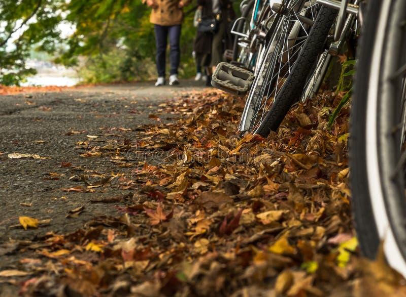 Herbstlaub auf dem Boden und den Rädern stockfotografie