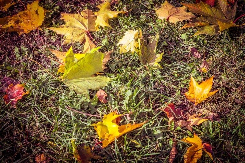 Herbstlaub auf dem Gras, bunte Blätter, gefallene Blätter stockfoto