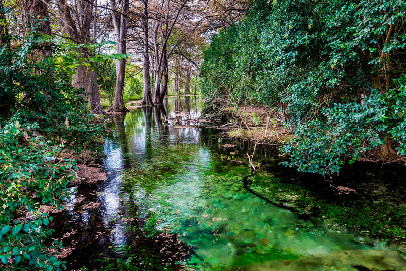 Herbstlaub auf dem haarscharfen Frio-Fluss in Texas lizenzfreies stockbild