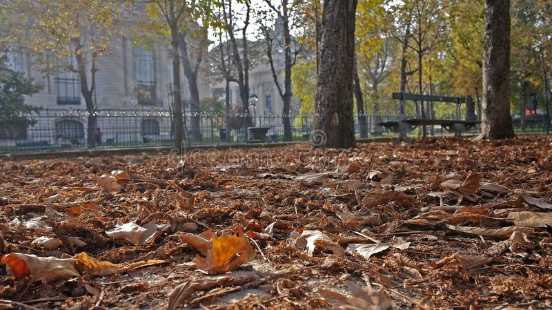 Herbstlaub auf den Champions Elysées in Paris lizenzfreie stockfotos