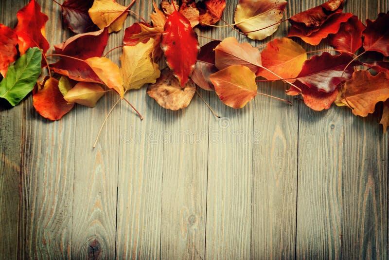 Herbstlaub auf hölzernem Brett lizenzfreie stockfotos