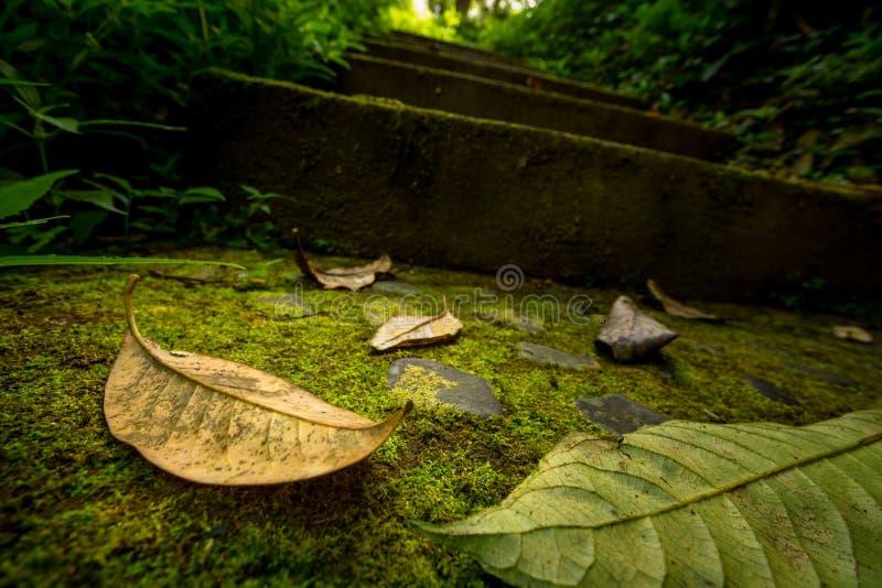 Herbstlaub auf moosiger Spur stockfoto
