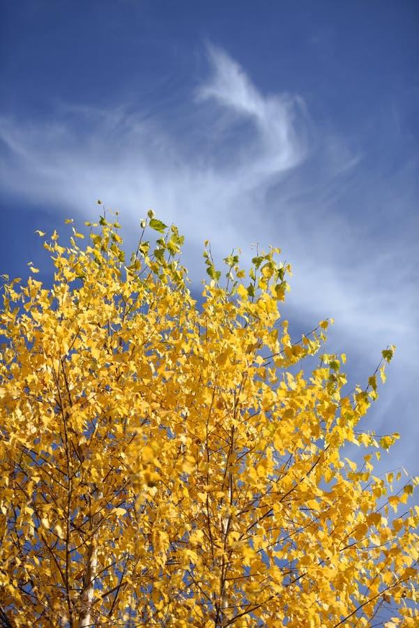Herbstlaub auf Suppengrün stockfotografie