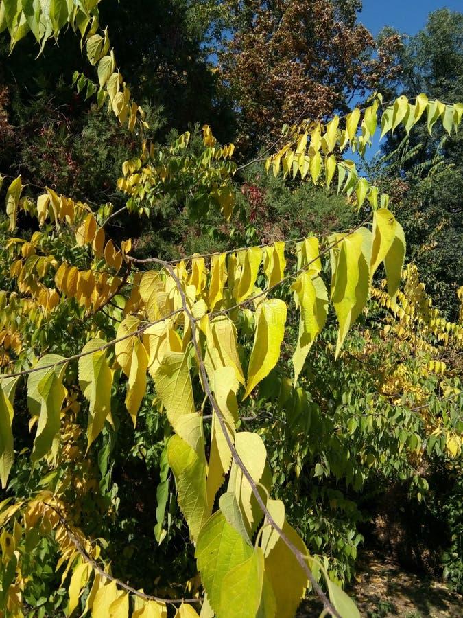 Herbstlaub am botanischen Garten - Macea, der Bezirk Arad, Rumänien stockfotos