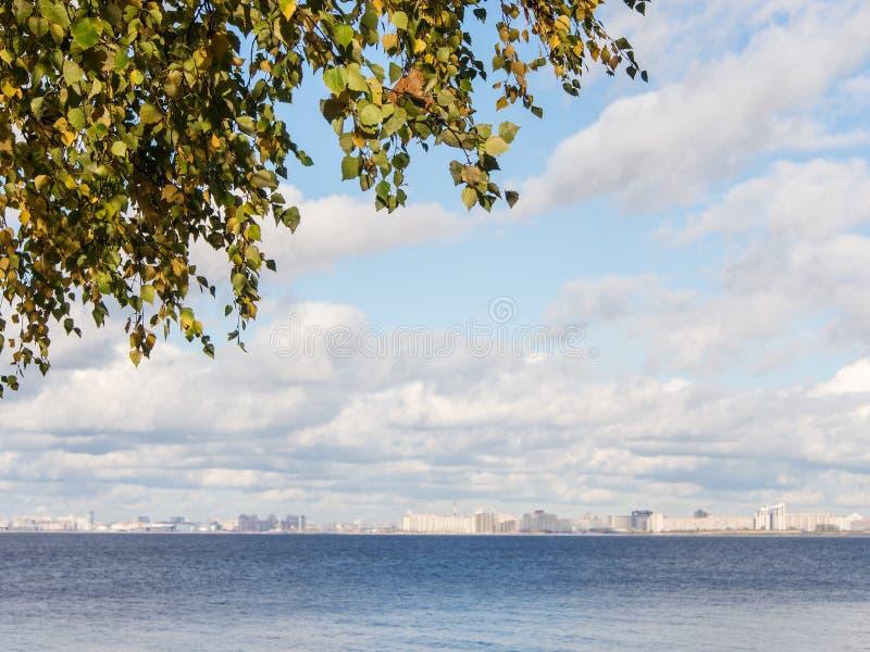 Herbstlaub der Birke lizenzfreies stockbild