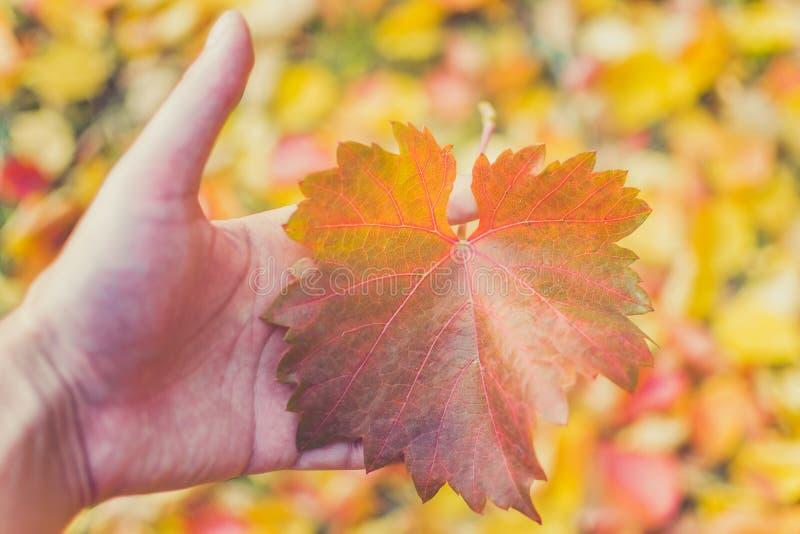 Herbstlaub in der Hand der Jahreszeit stockbild