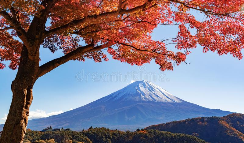 Herbstlaub in der Herbstsaison und Berg Fuji nahe Fujikawaguc stockbilder