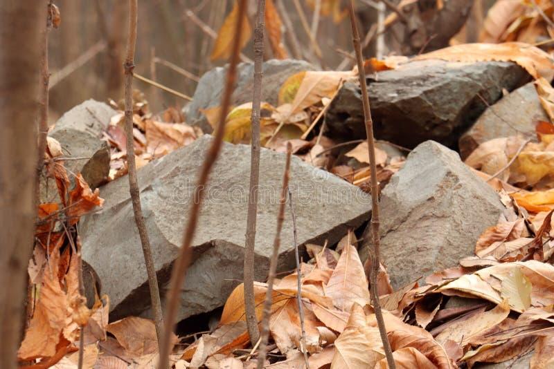 Herbstlaub, der Steine aus den Grund bedeckt stockfotos