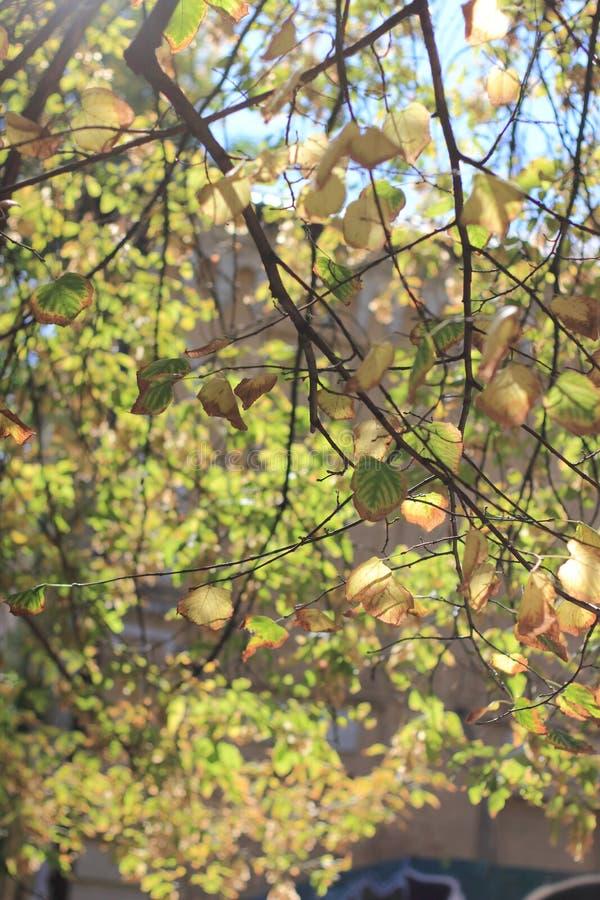 Herbstlaub des Blaus stockbild