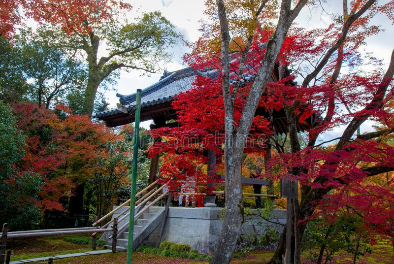 Herbstlaub des Rotahornblattes verlässt Hintergrund lizenzfreies stockfoto