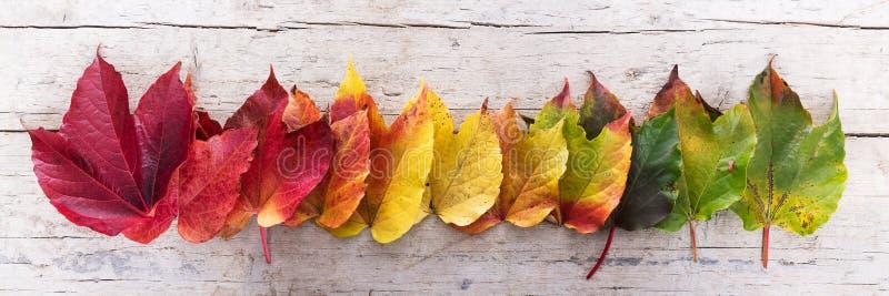 Herbstlaub in Folge lizenzfreie stockfotografie