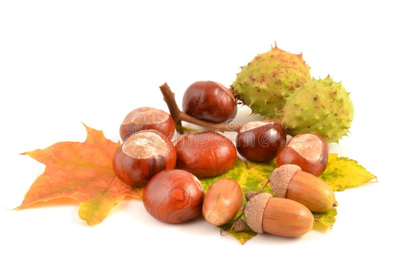 Herbstlaub, Frucht und Kastanie stockbilder