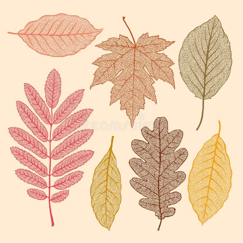 Herbstlaub, getrocknete Blätter eingestellt lizenzfreie abbildung
