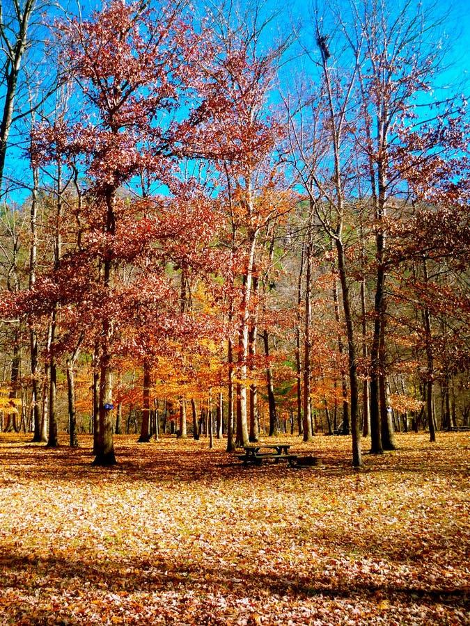 Herbstlaub im Park lizenzfreie stockbilder