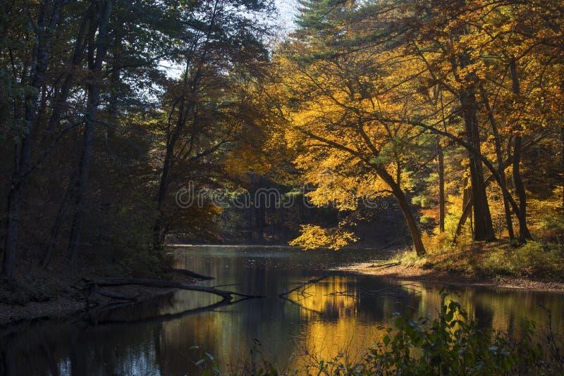 Herbstlaub im Wald auf See mit Reflexionen, Mansfield, Anschl. stockfotografie
