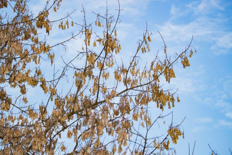 Herbstlaub im Winter kalt lizenzfreie stockfotos