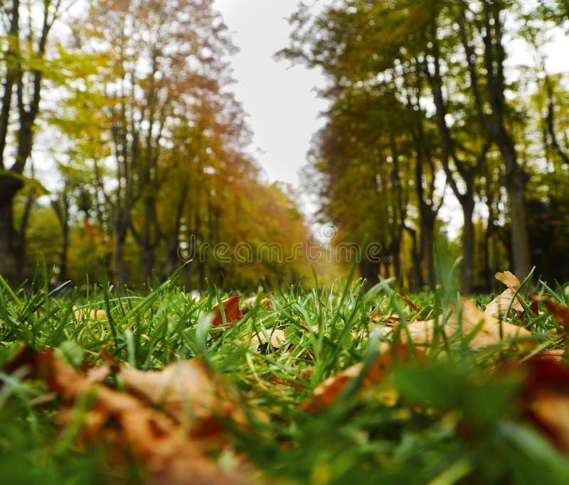 Herbstlaub in Katalonien lizenzfreie stockbilder
