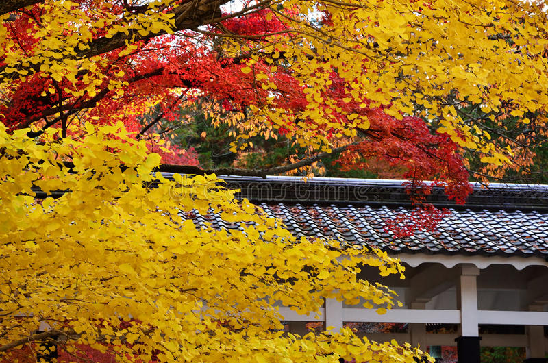 Herbstlaub in Kyoto, Japan lizenzfreie stockfotografie