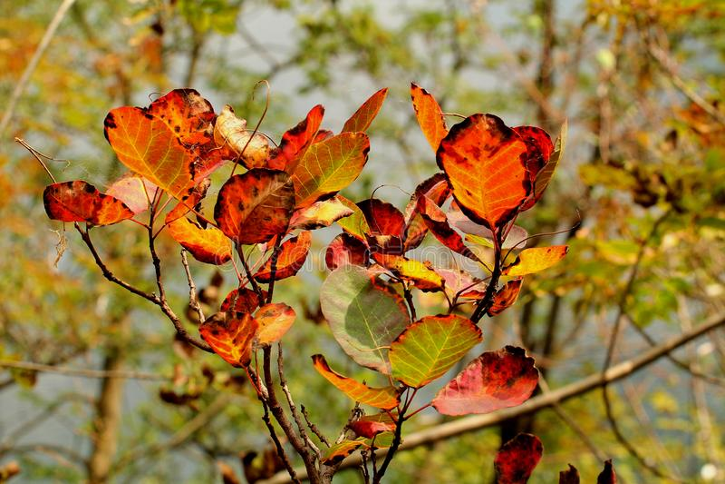 Herbstlaub am Plitvice See-Nationalpark lizenzfreie stockfotografie