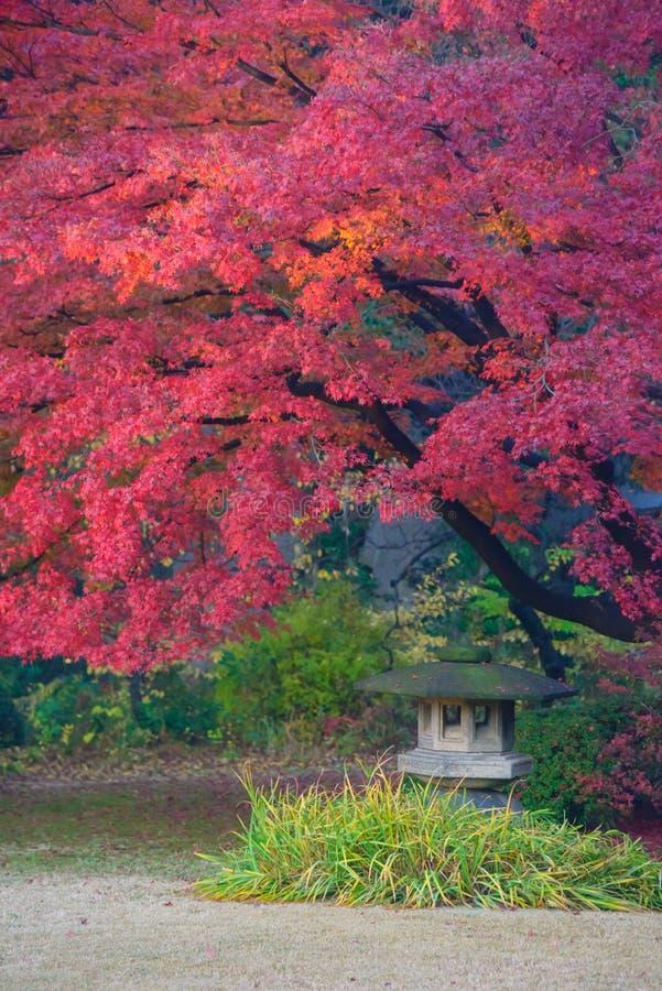 Herbstlaub in Rikugien-Garten, Komagome, Tokyo lizenzfreie stockfotografie