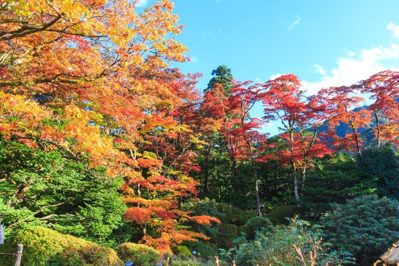 Herbstlaub Shoyo-en im japanischen Garten Nikko, Japan lizenzfreies stockfoto