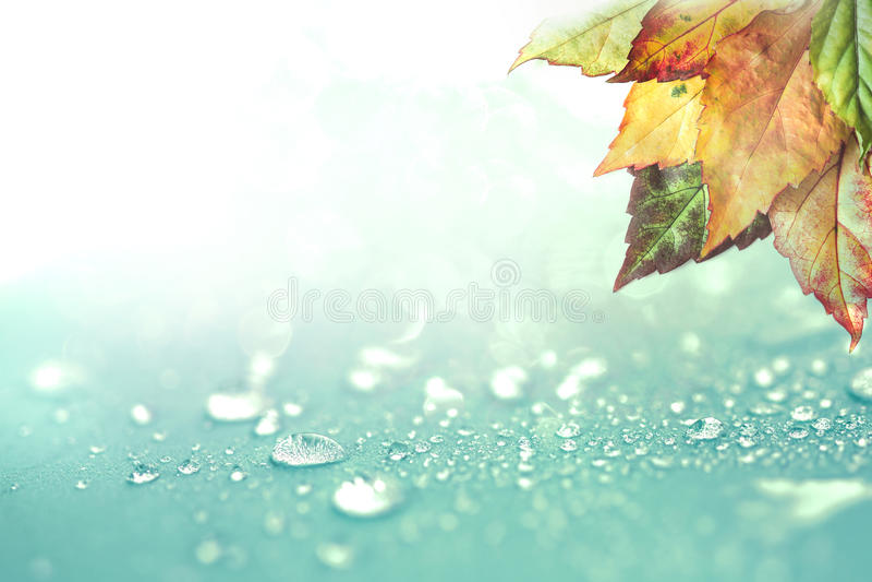 Herbstlaub- und Regenwassertropfenhintergrund lizenzfreies stockfoto