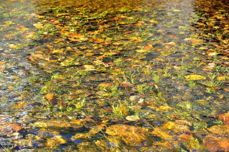 Herbstlaub und Steine an der Unterseite des Flusses Bunter Kürbis auf der Tabelle lizenzfreies stockfoto