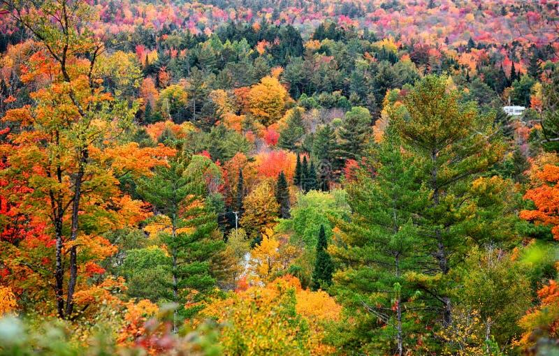 Herbstlaub in Vermont lizenzfreies stockfoto
