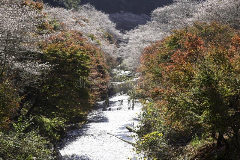 Herbstlaubbaum an Park Obara Fureai stockfoto