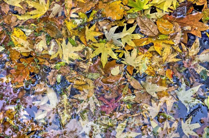 Herbstlaubcollage stockbild