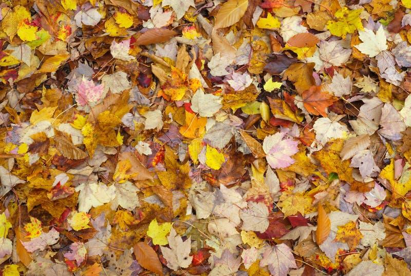 Herbstlaubfallfarbhintergrund-Beschaffenheitsmuster lizenzfreie stockfotografie